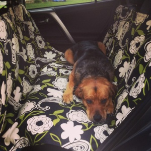 Handmade Dog Seat Cover